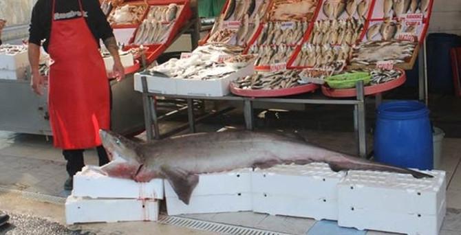 200 kiloluk köpek balığı yakalandı