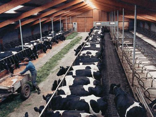 Hayvancılığa dört dörtlük destek