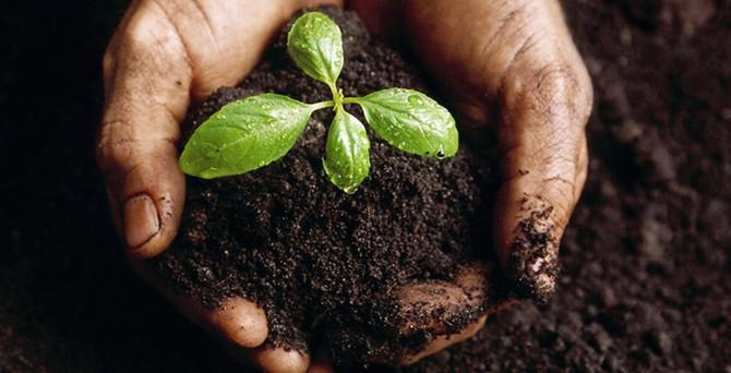 Karacabey uluslararası tohum üretim merkezi olmaya aday
