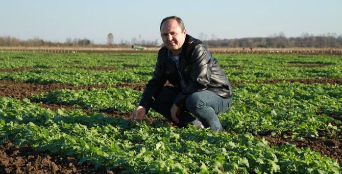 Türkiye'nin 'ikinci yerli kanola tohumu' üretildi