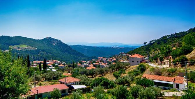 Dağ köyleri asırlık ağaçlardan organik zeytinyağı üretecek