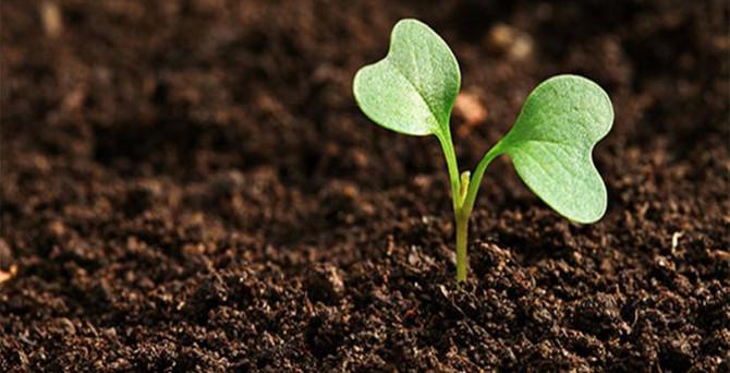 Limagrain 'tohumu' Türkiye'de büyütüyor