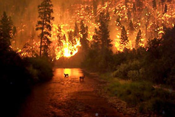 Birgi'deki yangın kontrol altında