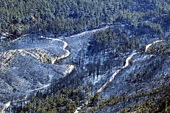 Foça'daki orman yangını kontrol altına alındı