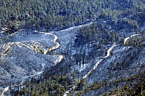 Kırklareli'nde çıkan orman yangını söndürüldü