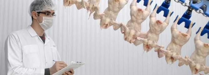 Piliç eti tüketimi artıyor