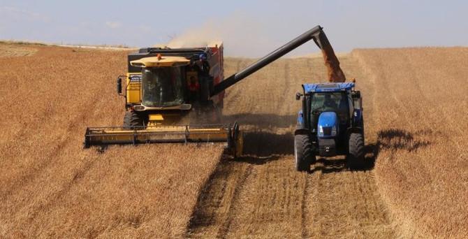 Rusya, buğdayda şampiyonluk yolunda