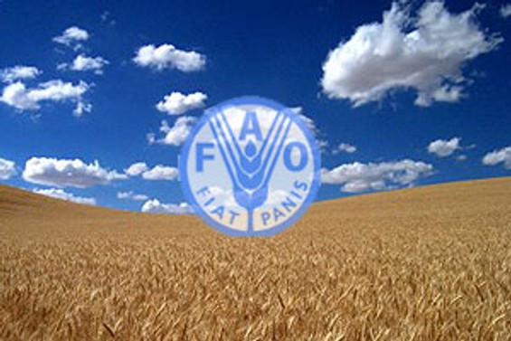 FAO'dan tahıl alarmı