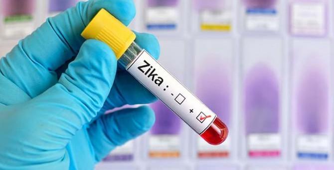 Zika aşısı maymunlarda işe yaradı