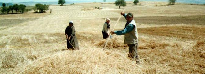 Dünya çiftçiler günü Diyarbakır'da kutlanacak