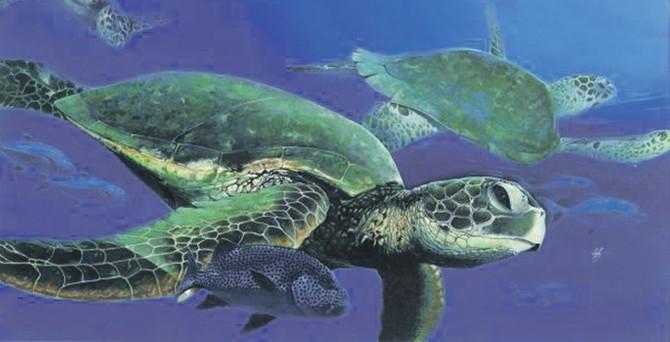 Yeşil deniz kaplumbağası artık uydudan izleniyor