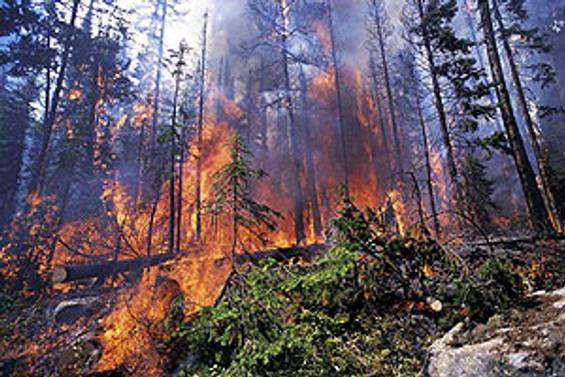 Akseki'de orman yangını çıktı