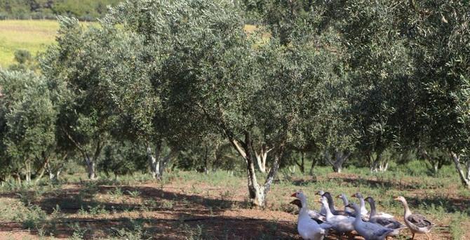 Kırsal kalkınma için organik tarım