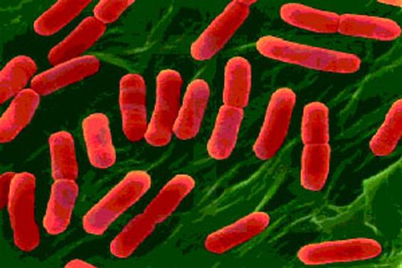 Bakteri iki can daha aldı
