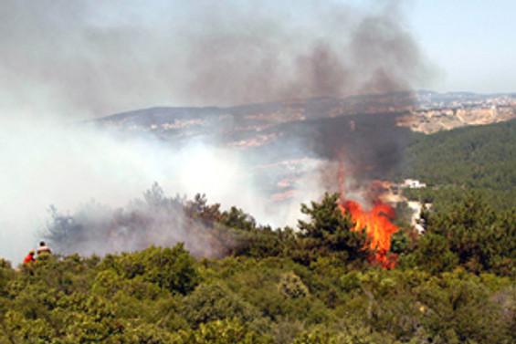 Ümraniye'de çamlık alanda yangın