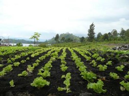 Tarımda yeni uygulama alanları belirlendi