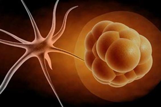 Klonlama yoluyla ilk kez insan kök hücresi üretildi