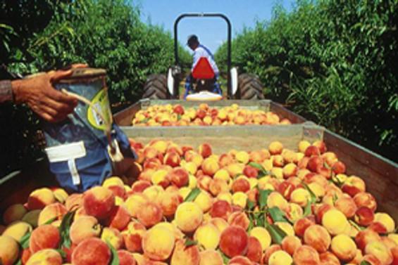 TZOB: Üretici ile market fiyatları farkı yüzde 331