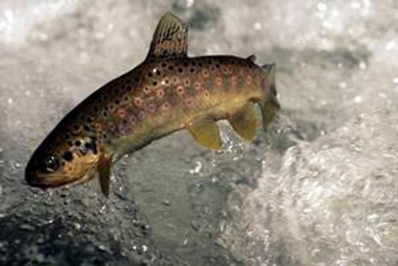 """""""Kültür balıklarında risk yok"""""""