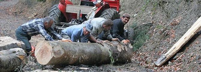 Orman ürünü satış geliri 2 milyar TL'yi aştı