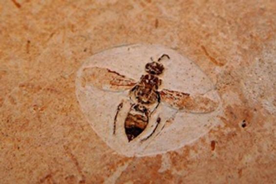 En eski eksiksiz böcek fosili bulundu