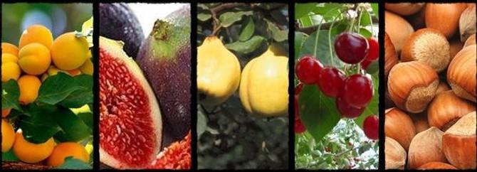 Meyve sezonu ihracatı hareketlendirdi