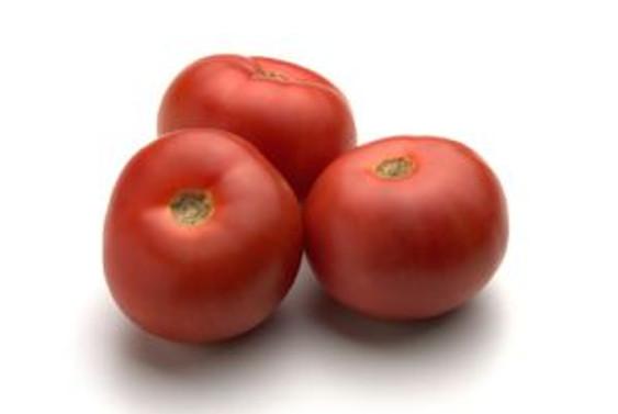 Mildiyö hastalığı domateste üretimi düşürdü