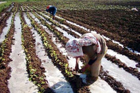Tarım işçilerinin yaşam şartları iyileştirilecek