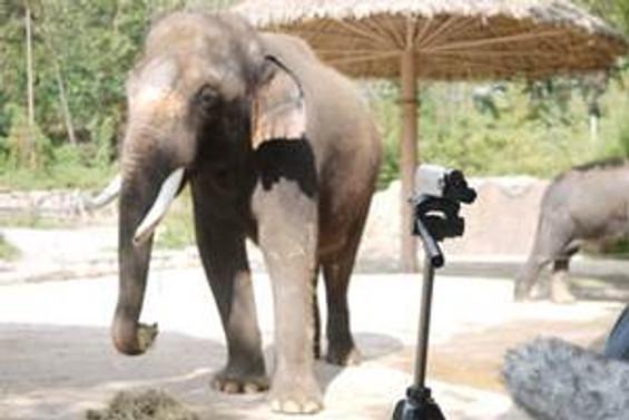 Donmasın diye fillere votka içirdiler