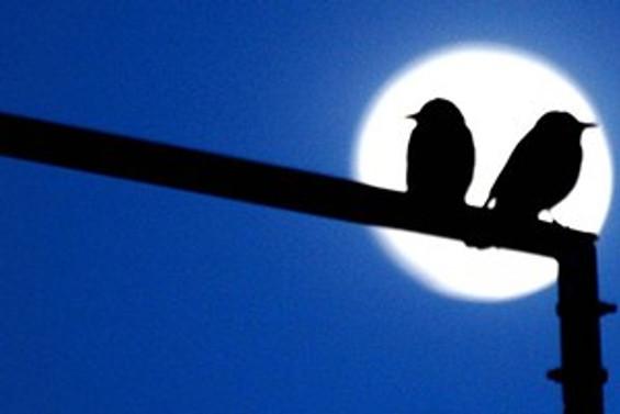 İnsana zararlı ama kuşlara faydalı