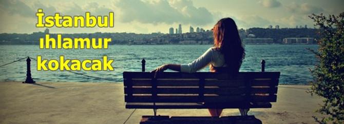 İstanbul'a 100 bin ıhlamur dikilecek