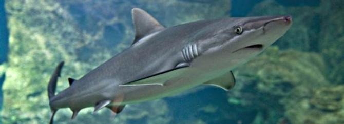 Köpekbalığı sucuğunun kilosu Bursa'da 80 lira