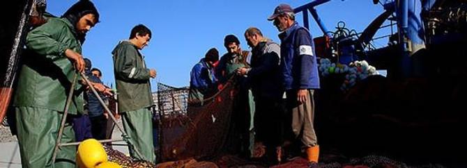 Yunuslar, balıkçının tutacağı balığa ortak oldu
