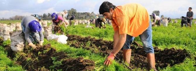Mevsimlik işçi Ardahan'da kazandı