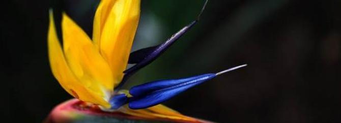 Pamukkale'de yöreye özgü 29 bitki türü saptandı