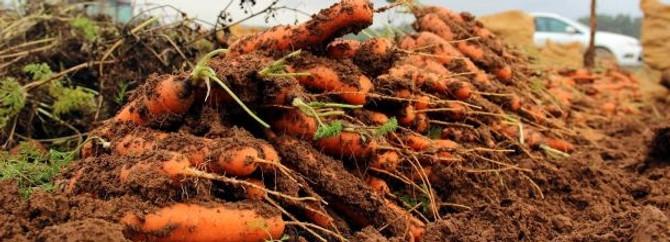 Çiftçiler için analiz tarihi belirlendi