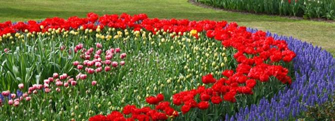 Yalovalı çiçekçi, 'Garden' ile ihracatı 10 kat artıracak