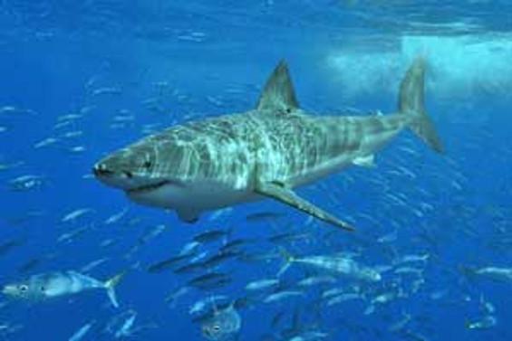 Çanakkale'de 5 metrelik köpek balığı