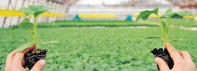 """""""Tarım büyümede diğer sektörlere fark attı"""""""