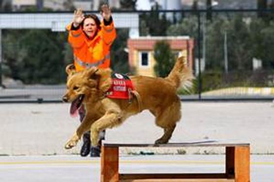 Sokağa terk edilen köpek hayat kurtaracak