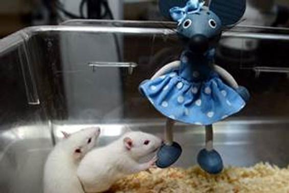 Fikrini işe dönüştürdü fare ihraç etti
