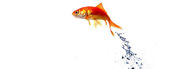 Yeni balık türleri keşfedildi