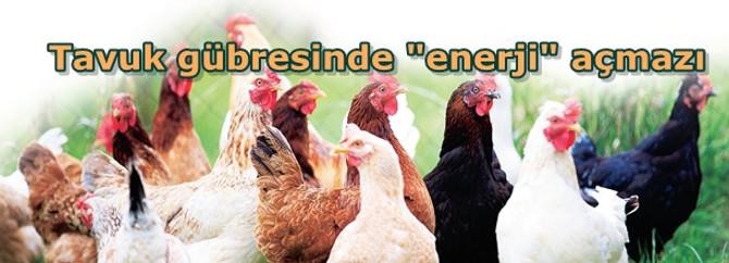 """Tavuk gübresinde """"enerji"""" açmazı"""