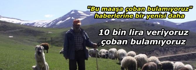 10 bin lira veriyoruz, çoban bulamıyoruz