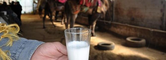 Türkiye'ye kargoyla deve sütü dağıtıyor