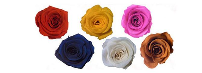 Solmayan taraftar çiçekleri satışta
