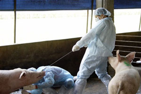 Virüs bu kez insandan hayvana geçti