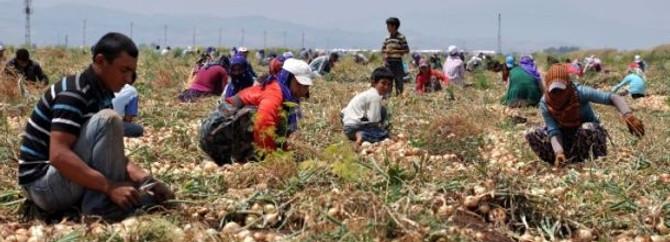 Mevsimlik işçiler de Reyhanlı mağduru