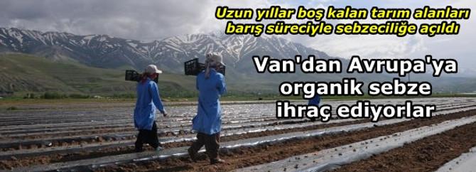Van'dan Almanya ve Rusya'ya organik sebze ihracatı