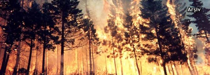ABD'de orman yangını